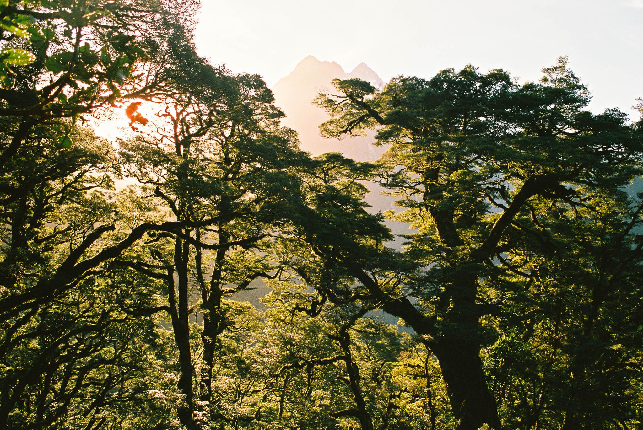 Mountains Through Trees