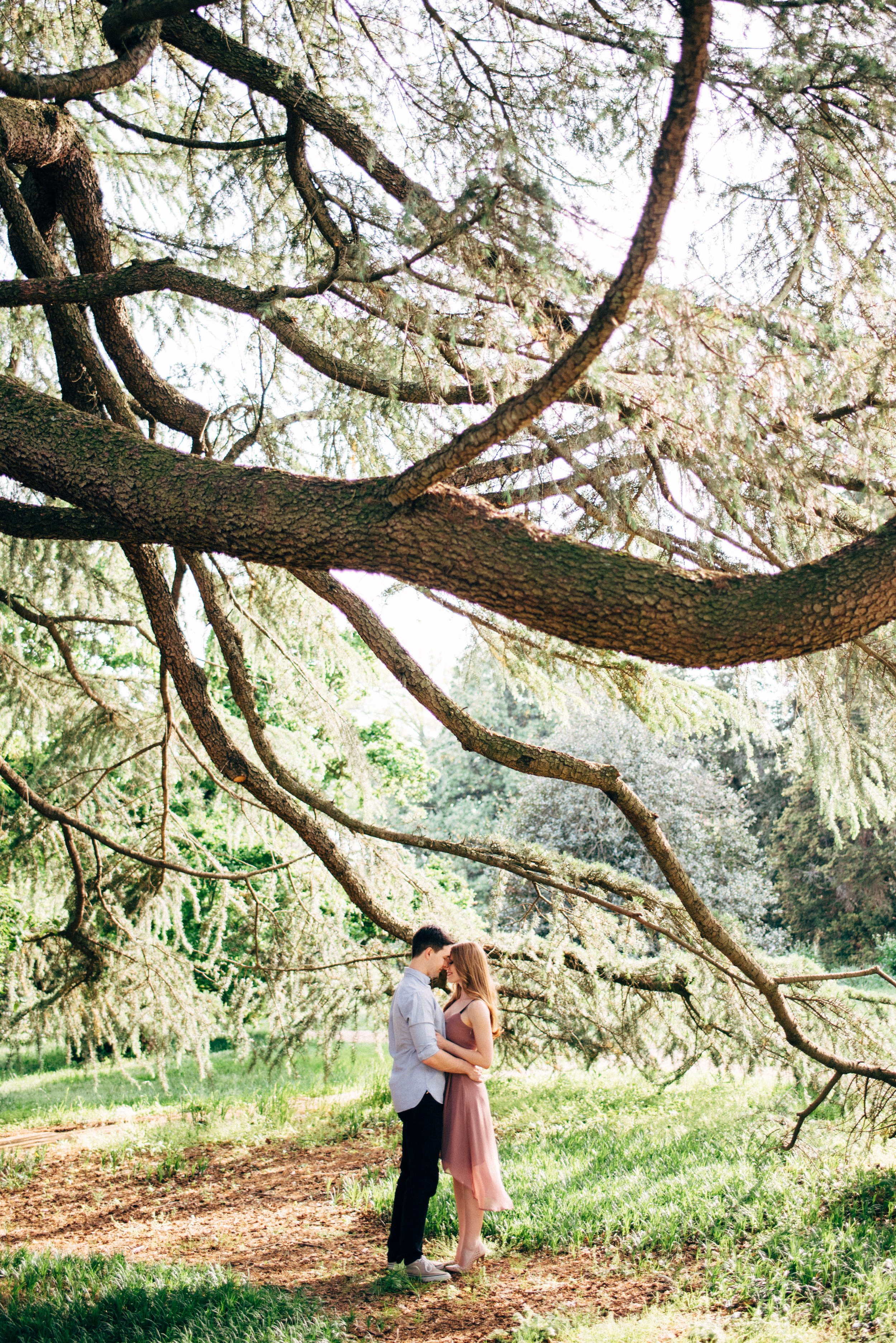 park engagement under the trees