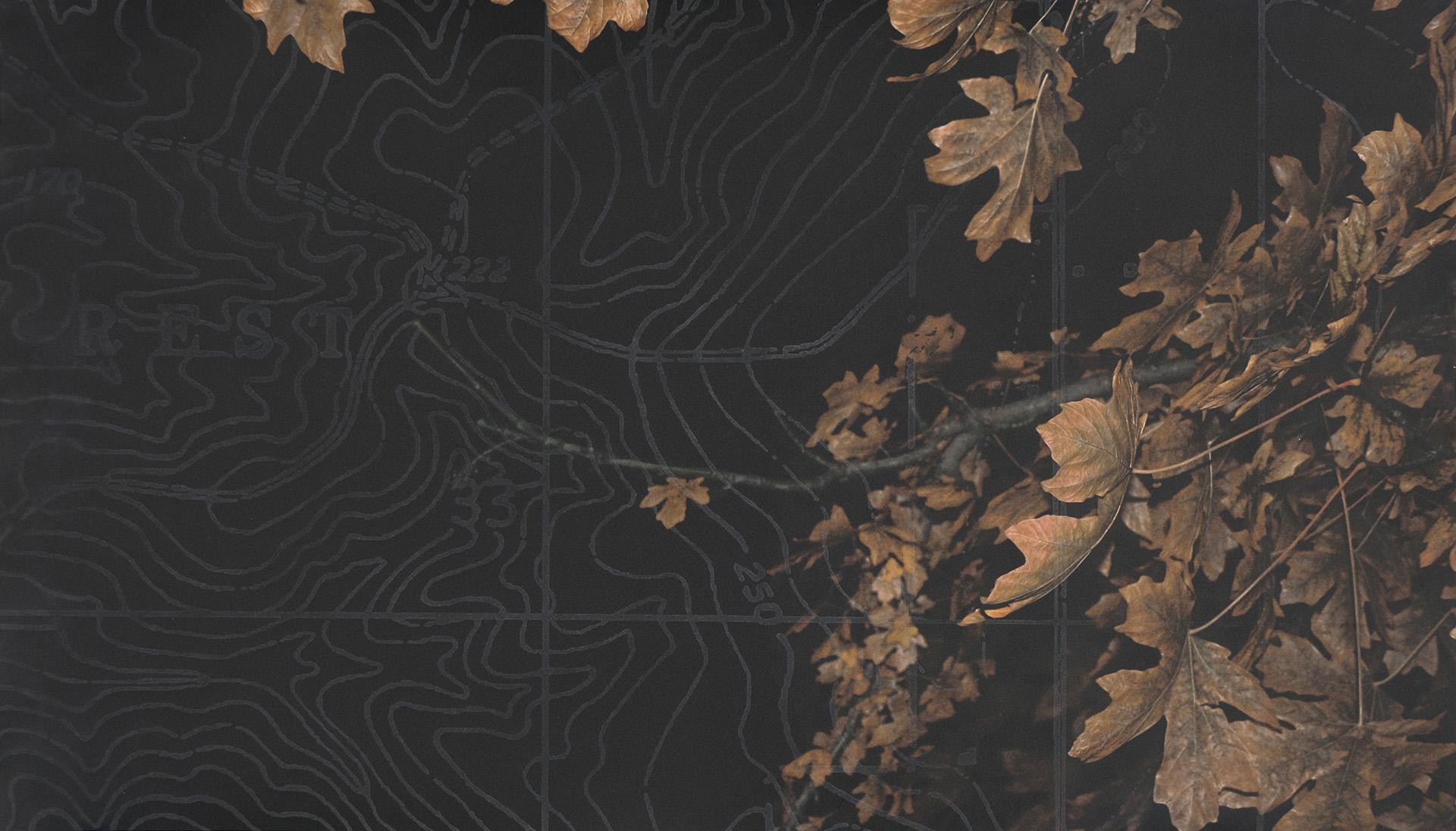 Rest, 2016, archival inkjet, etching, 16.5 x 30 in