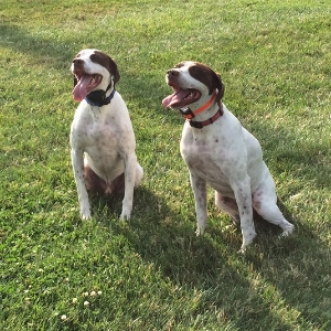 Pointers - Frances & Bubba