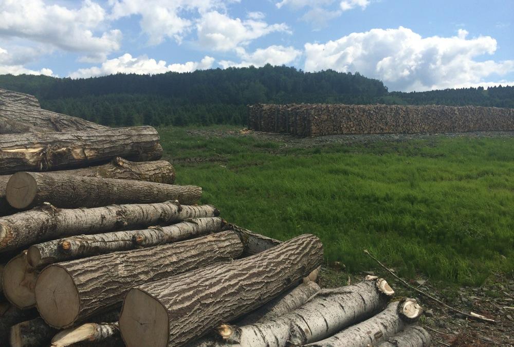 eastern_townships_logging.jpg