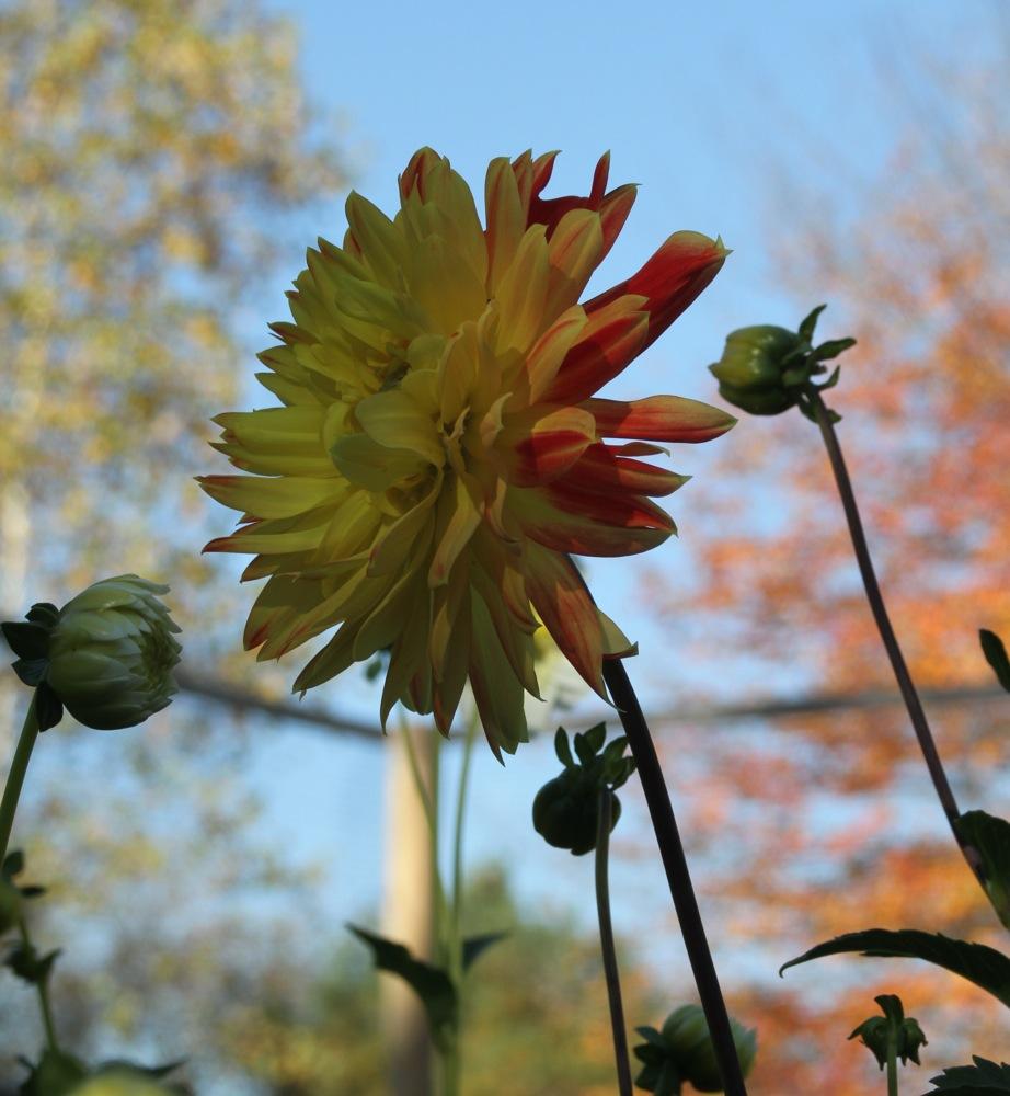 fall_pinwheel.jpg