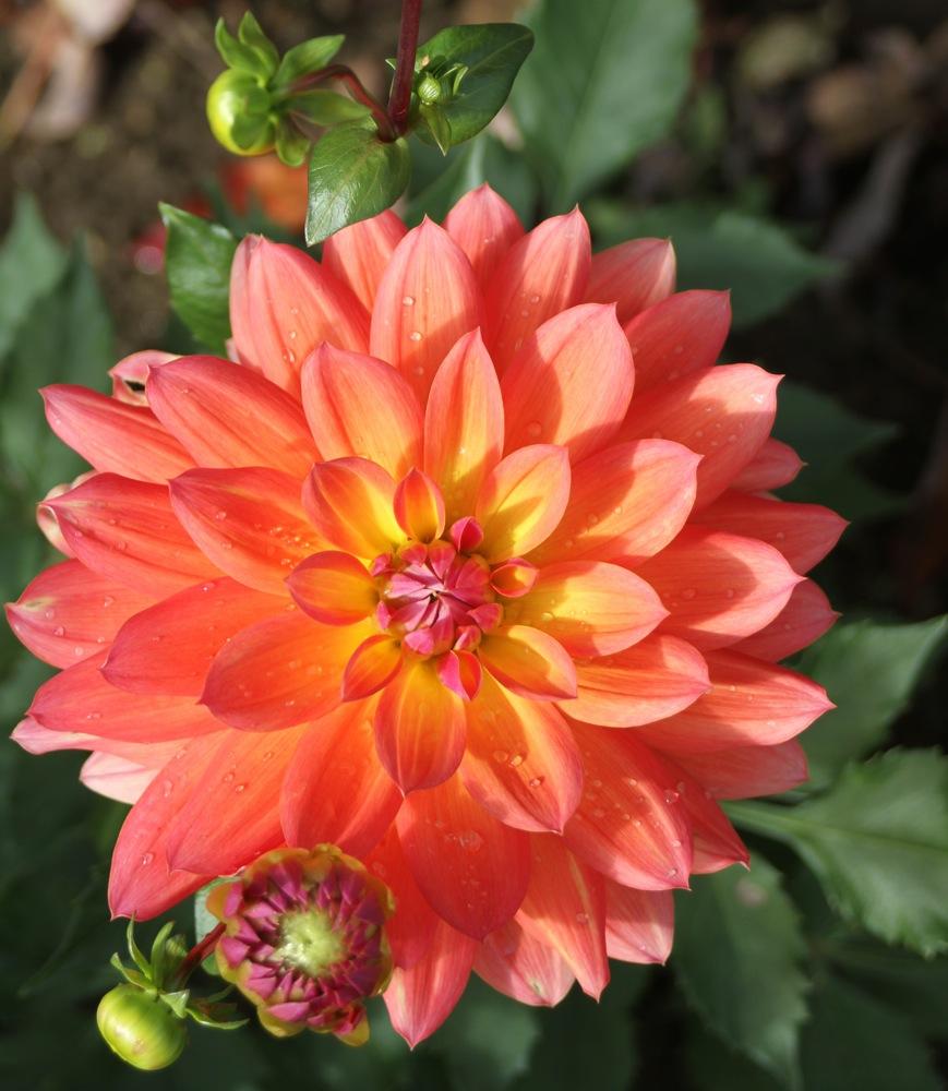 home_garden_fall_beauty.jpg