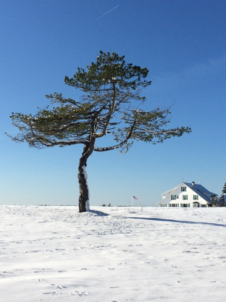 late_fall_snow_walk.jpg
