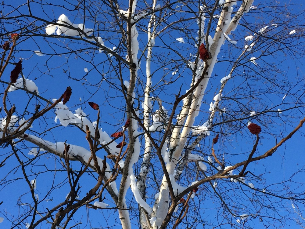 november_snow_walk.jpg