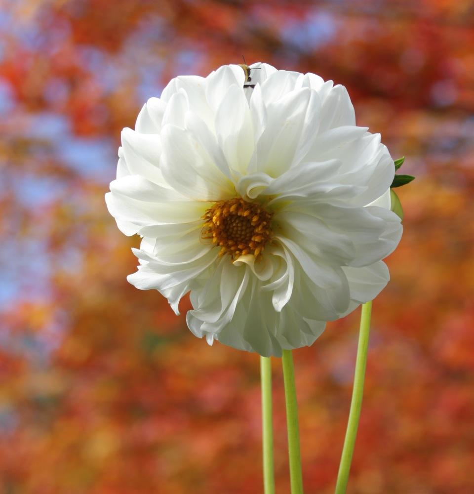 sneaky_bee_free_riding_flower.jpg