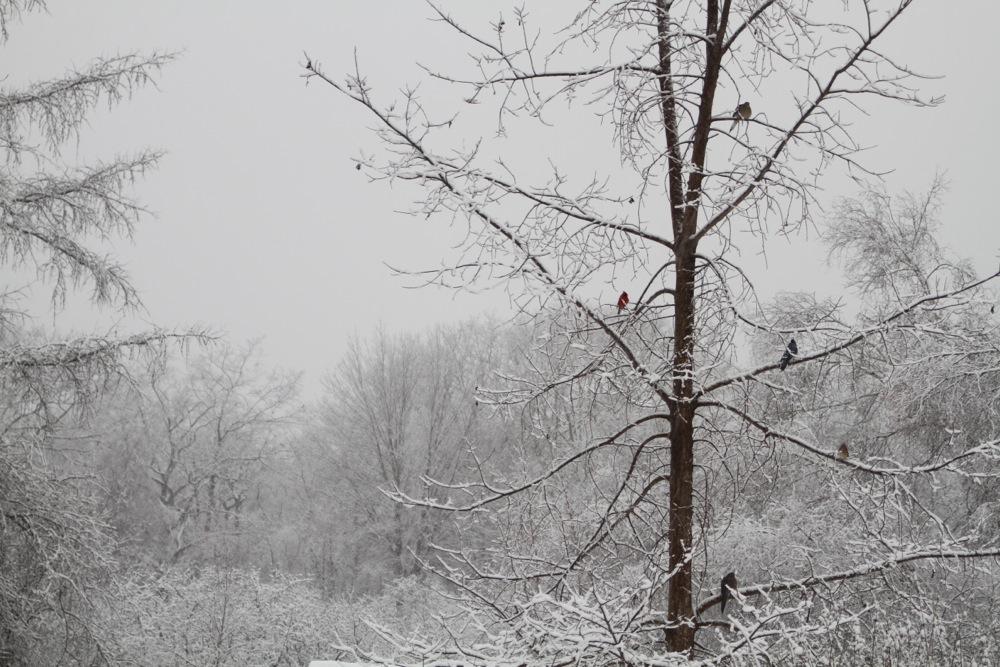 Thanksgiving_Eve_Storm_2014_birds-eye-view.jpg