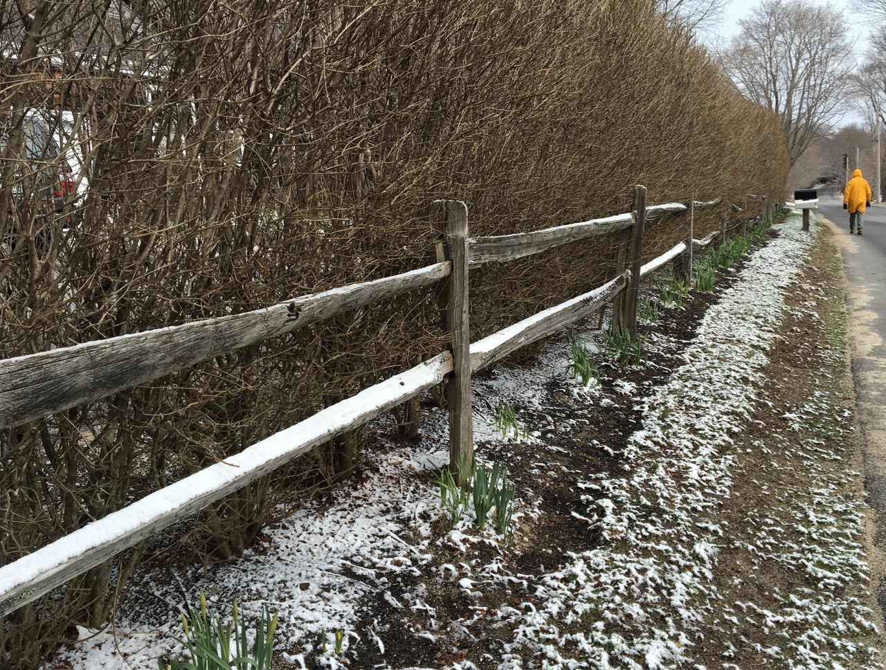 ray-fence-daffodils-road.jpg