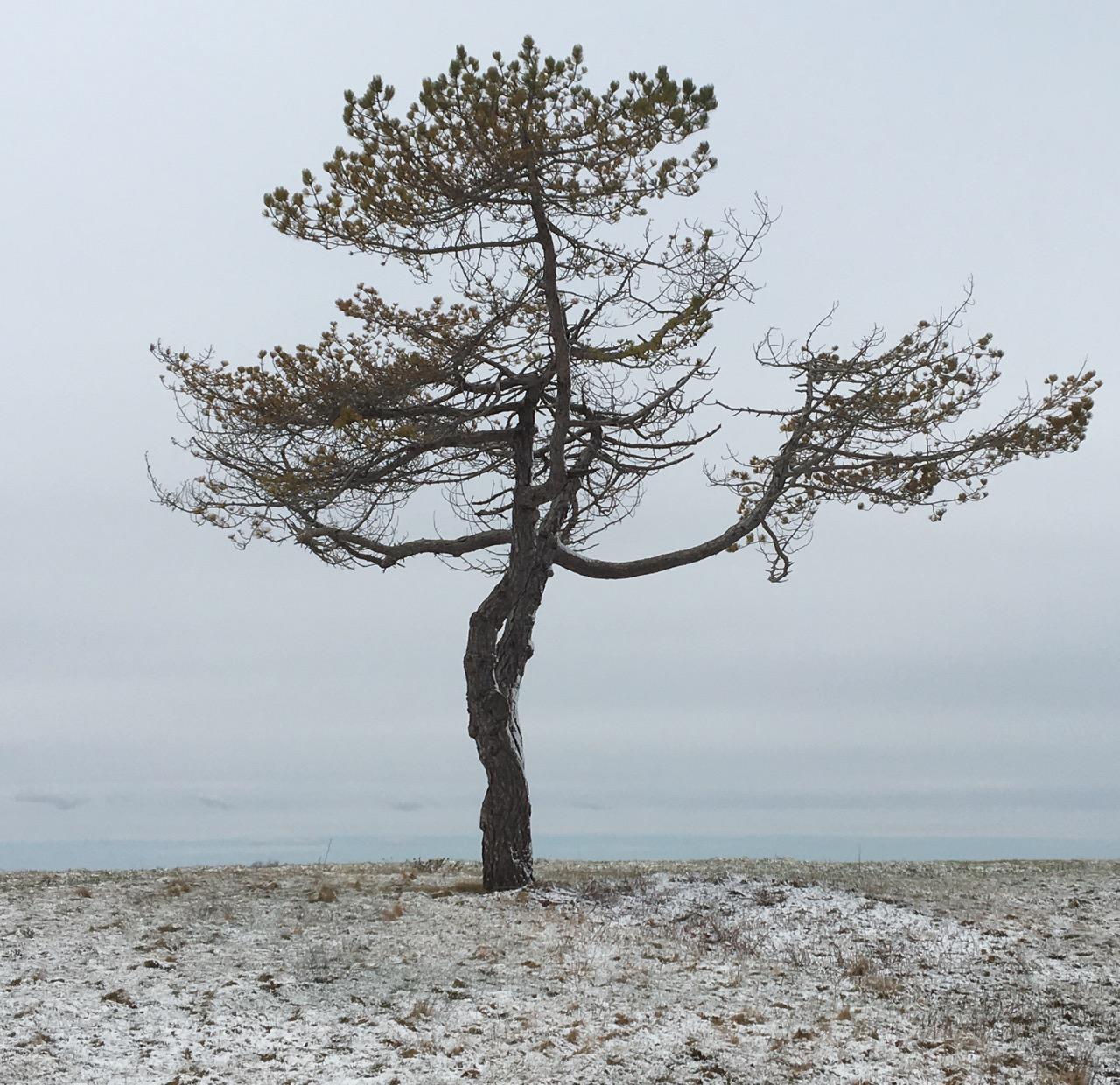 land-sky-tree.jpg