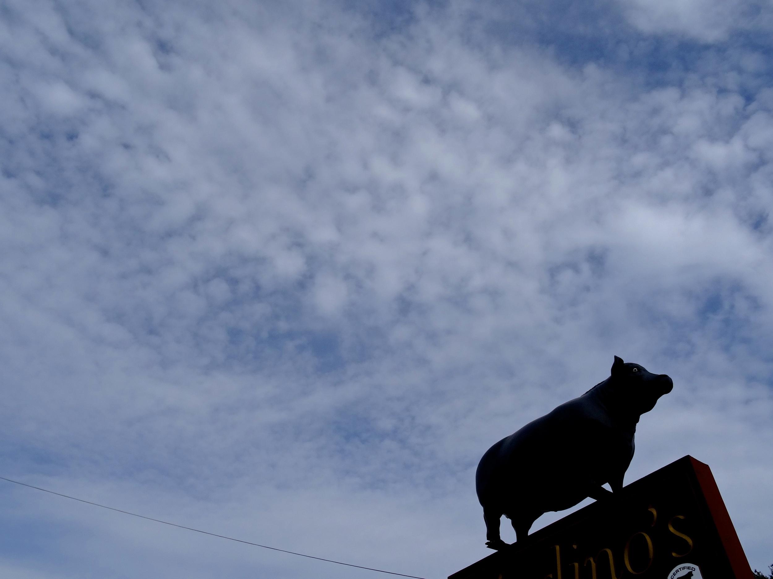 cow-afraid-of-heights.jpg