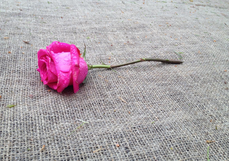 rose-drops.jpg