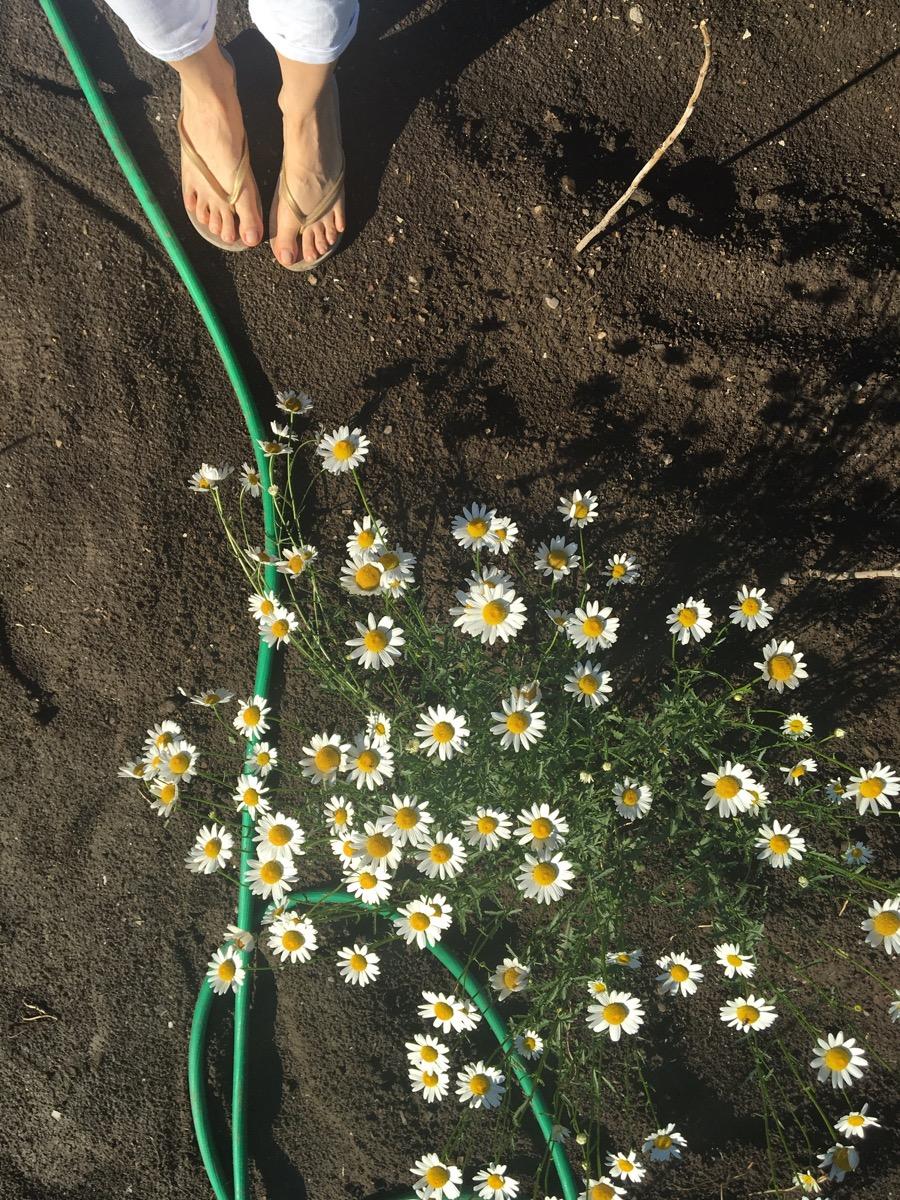 flip-flops-daisies.jpg