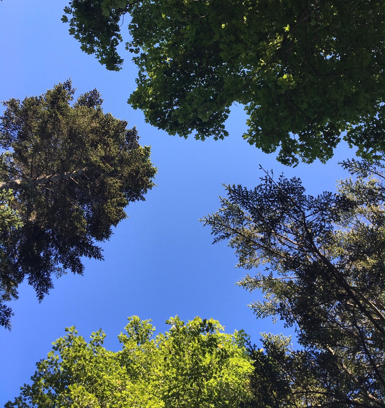 trees-convo.jpg