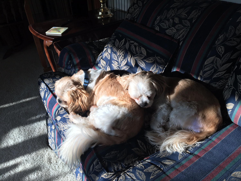 dogs-nap-routine.jpg