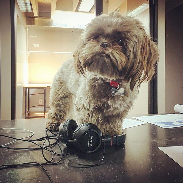 Business By Charlie tip of the day: Wanna look busy? Put on headphones at your desk. 📈📊📇 #goodideas #winfriendsandinfluencepeople #officestuff