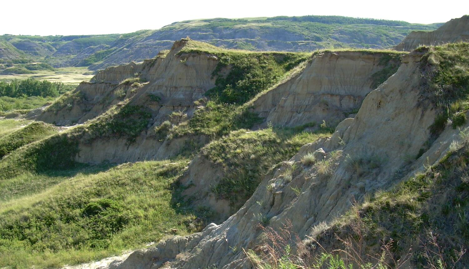 From a surface fossil hunting trip in central Alberta, 2008.