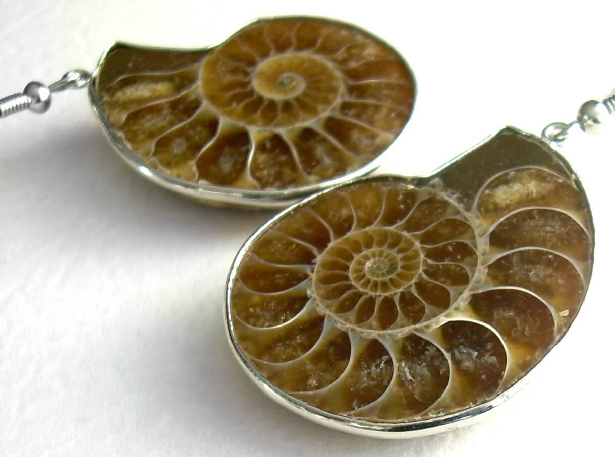 Ammonites are some of the most commonly known invertebrate fossils.