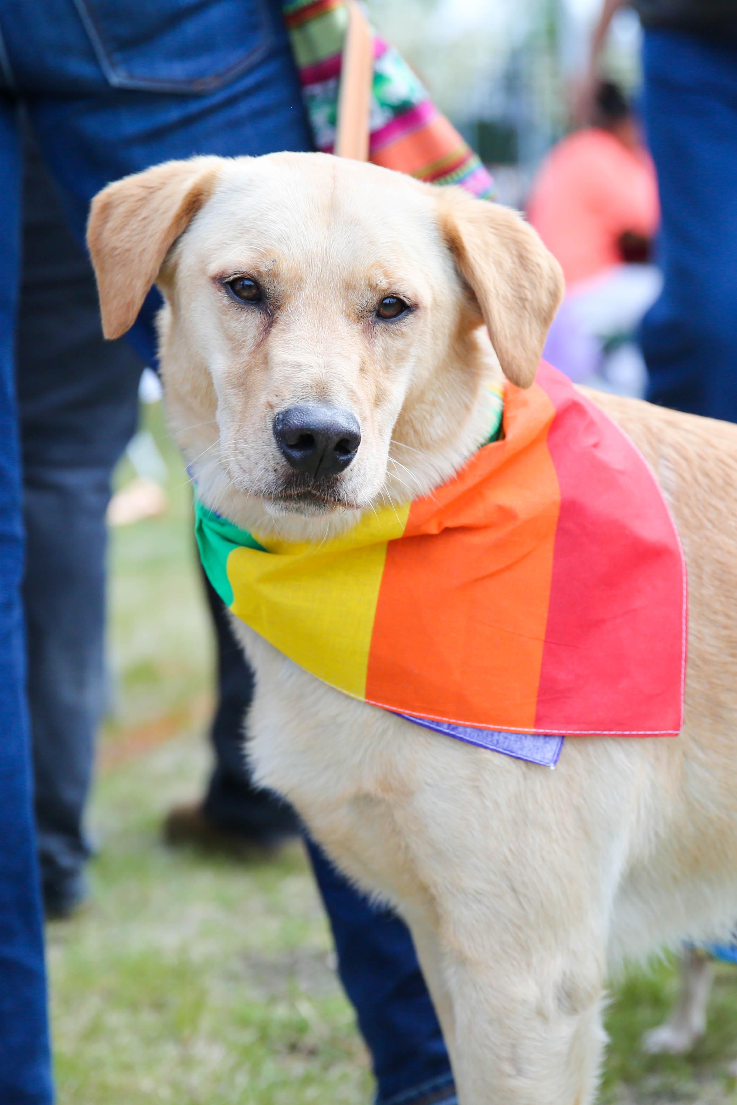 Pride 2015-18.jpg