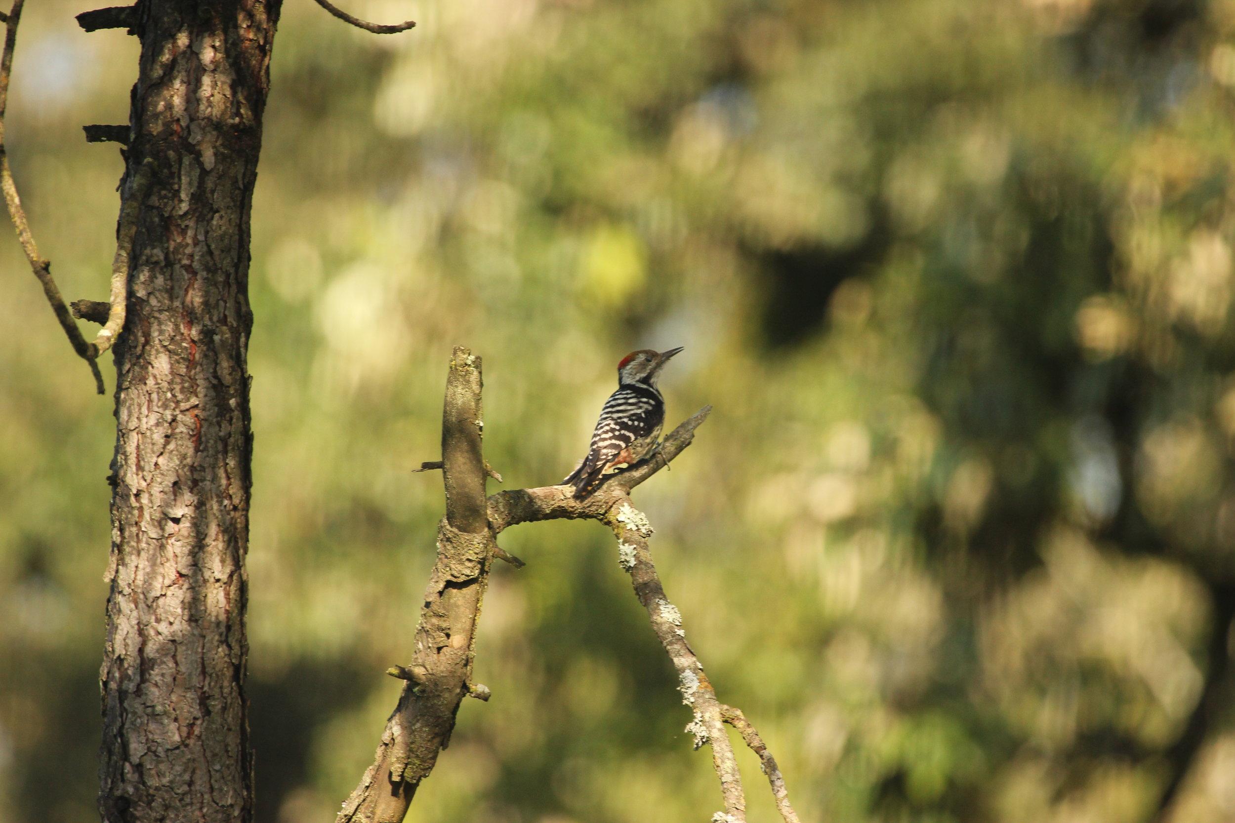 Photo Credit - Avijit Dutta