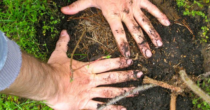 earthing_hands-dirt.jpg