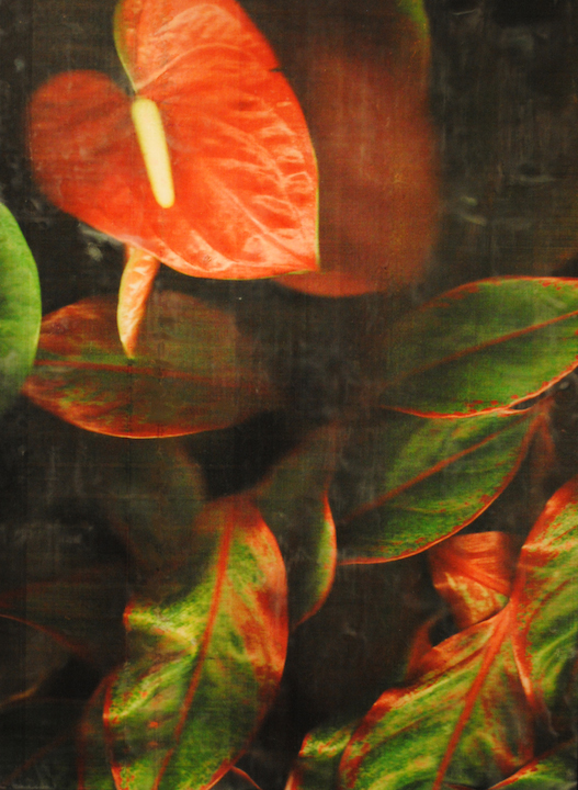 Barb Vogel, Red Peace Lily, photography, encaustic, painting, floral, Sherrie Gallerie