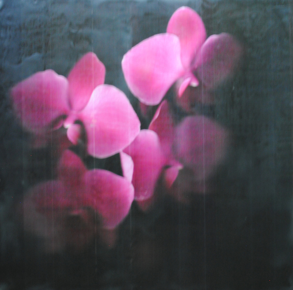 Barb Vogel, Orchid 4, photography, encaustic, painting, floral, Sherrie Gallerie