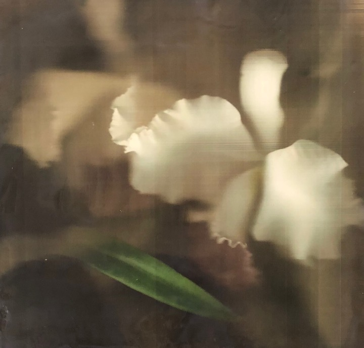 Barb Vogel hand held wand digital scan print photography wax encaustic floral flower orchid painting Sherrie Gallerie Short North Art Gallery Columbus Ohio