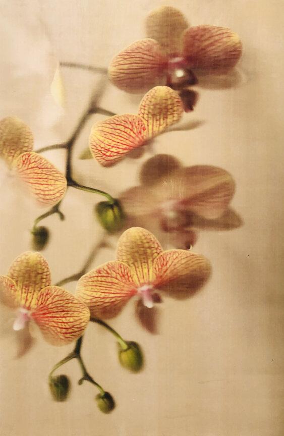 Orange Orchids small.jpg