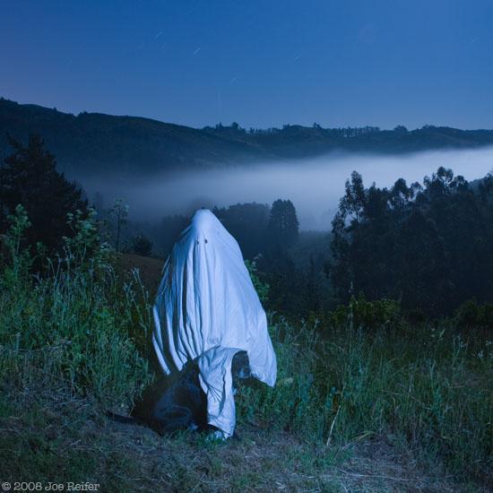 ghostmtdog.jpg