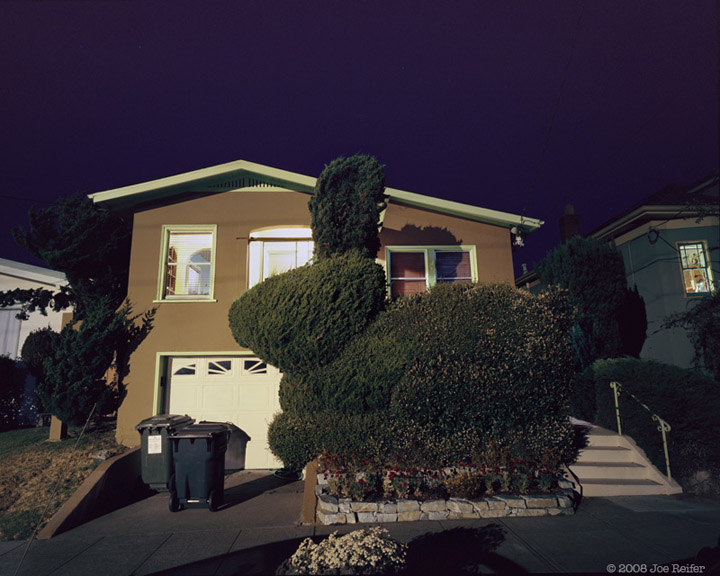 Berkeley Bunny Topiary at Night -- by Joe Reifer