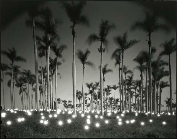 #356 Palm, 1997 -- by Tokihiro Sato