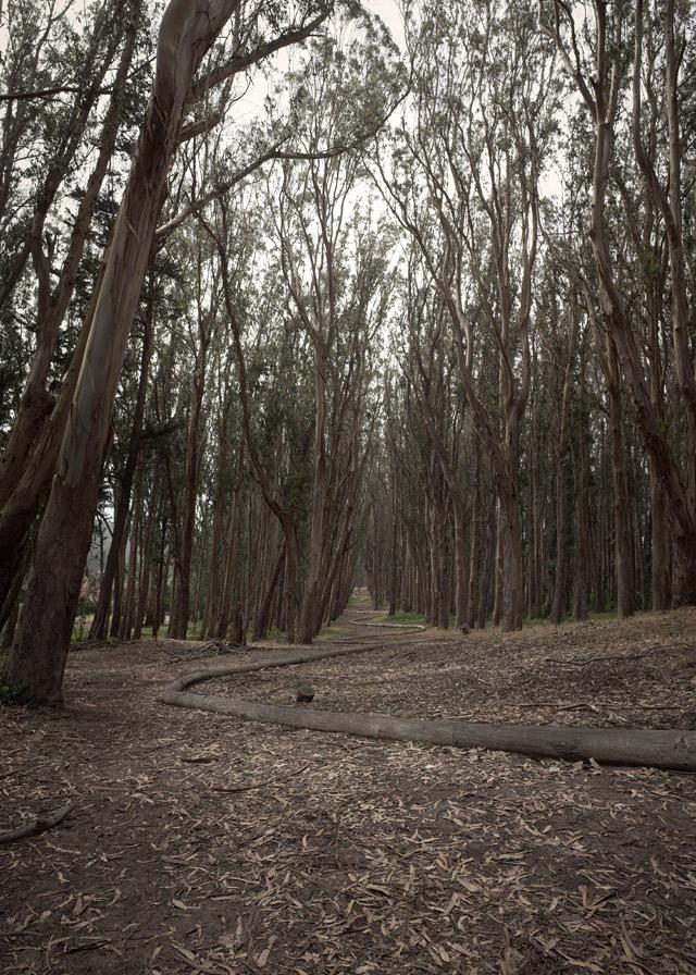Andy Goldsworthy: Wood Line - photo by Joe Reifer
