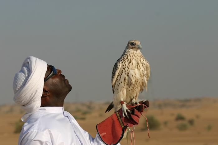 Falconing_in_Dubai_by_NicolasCameron4w.jpg