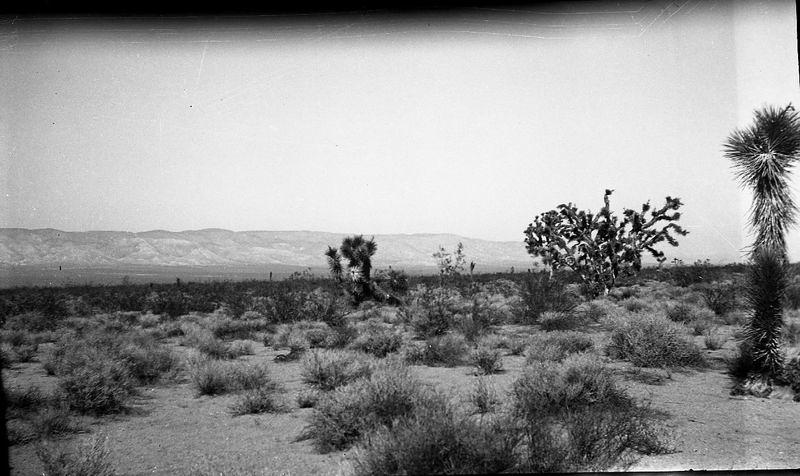 desertdreams_15.jpg