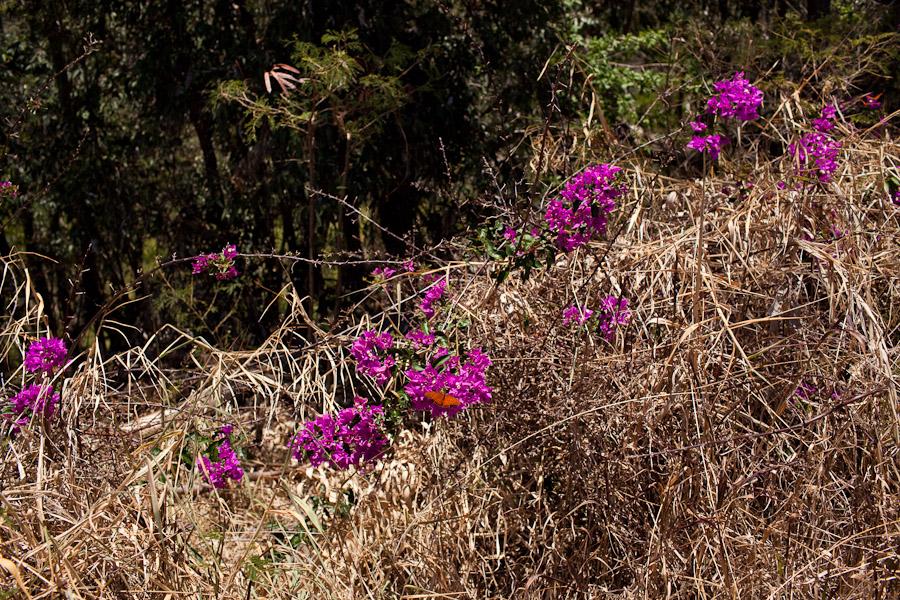 hawaii_20090609_11-9.jpg