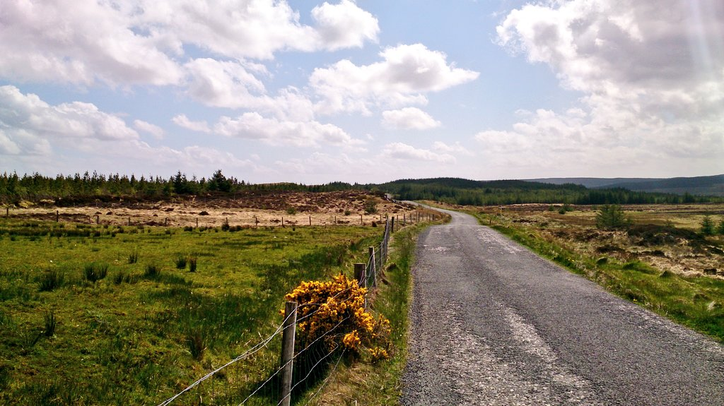There were many open bog lands with extreme wind, and when I stopped it was hard to keep still enough to take photos as I had to awkwardly balance my bicycle and myself from getting knocked over by the wind.