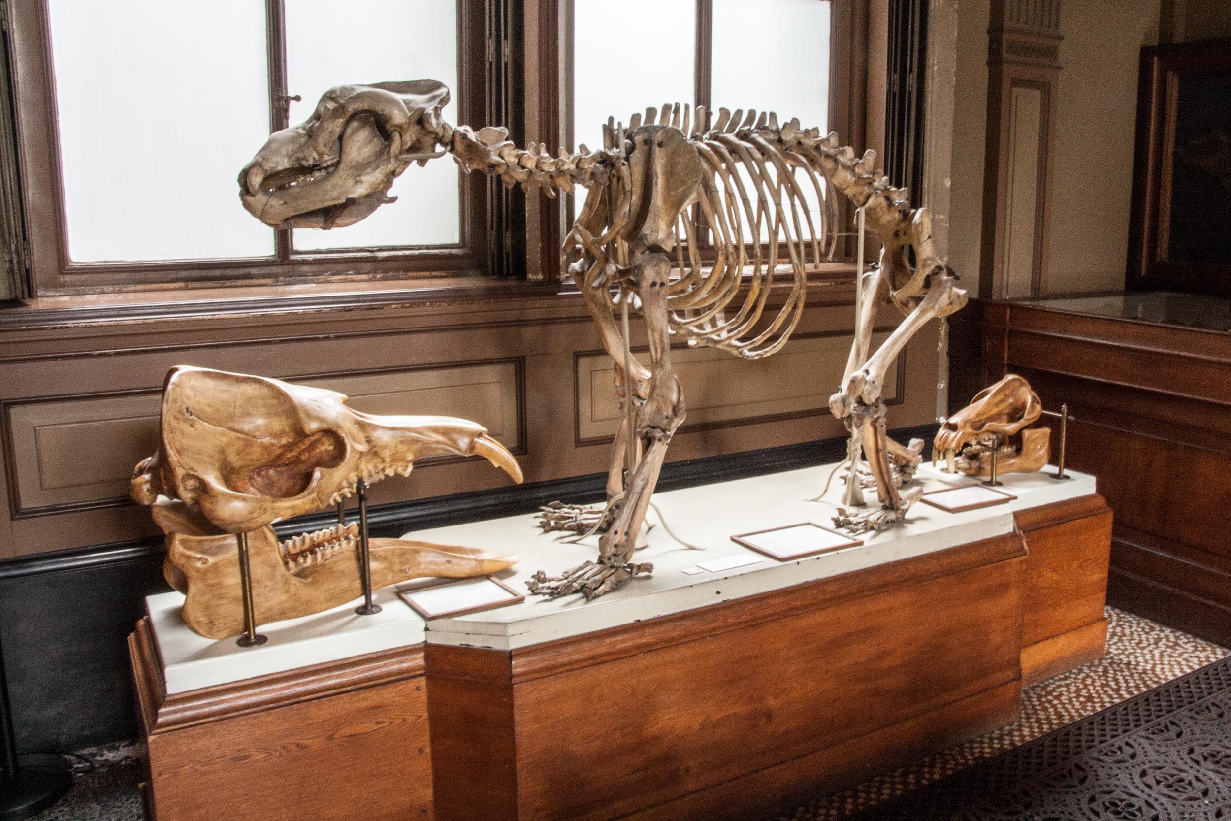 Teylers Museum Fossil Room I