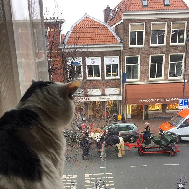 watching the horses #kerstmarkt #haarlem #cat #netherlands #christmas