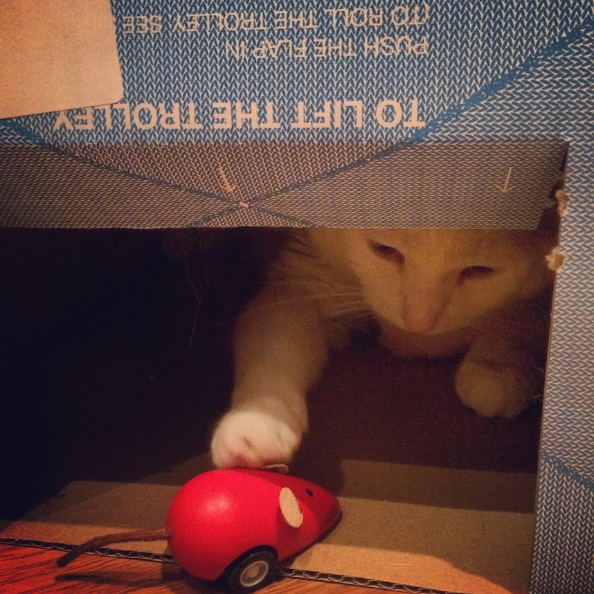 Game of Cat and Mouse
