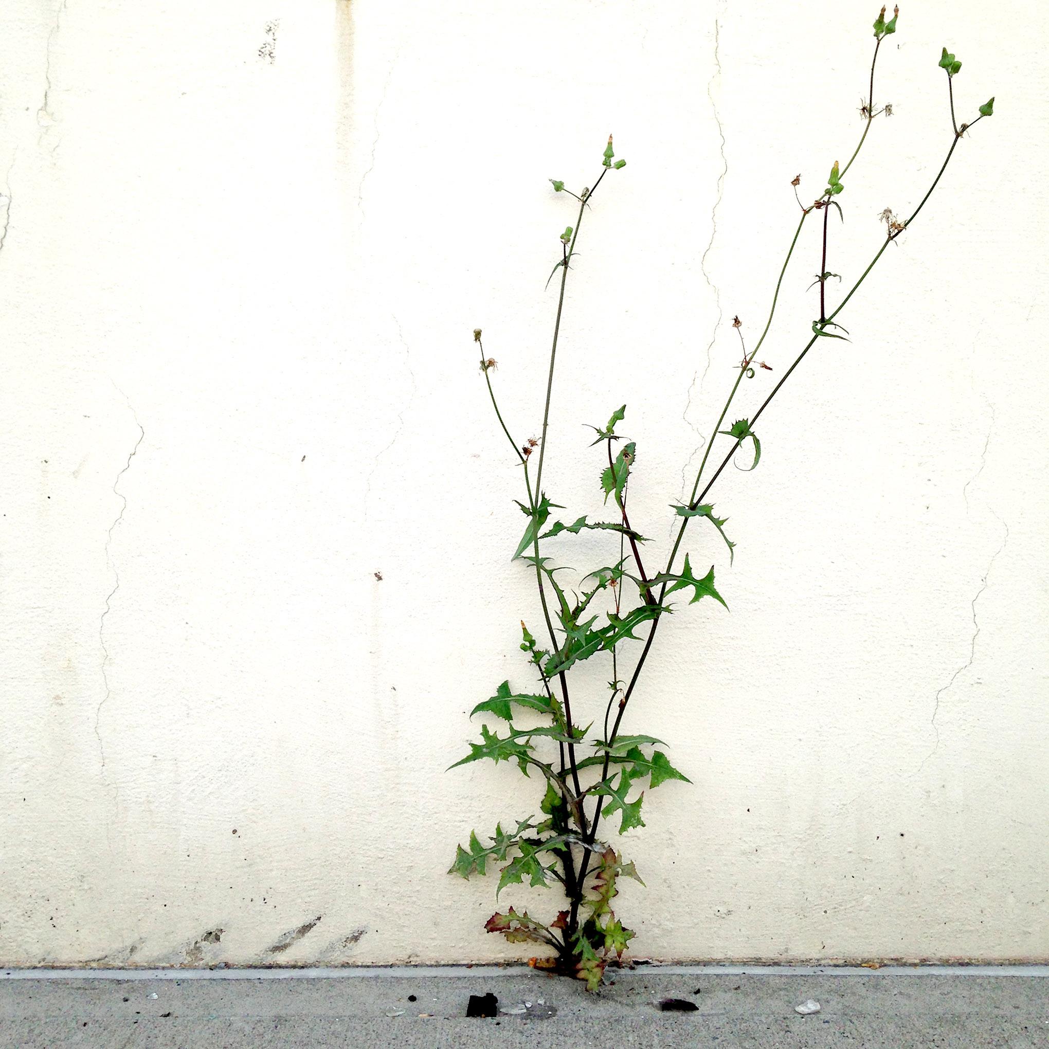 Green Plant1.jpg