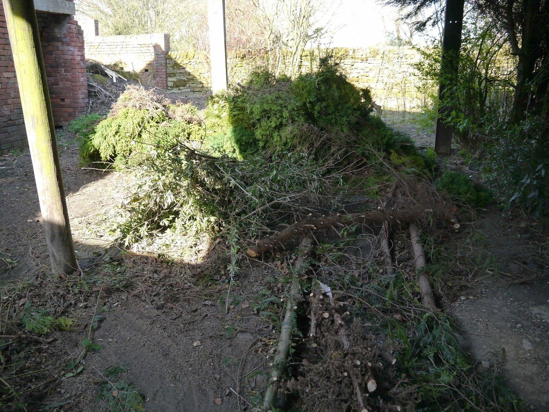tree chopping.jpg