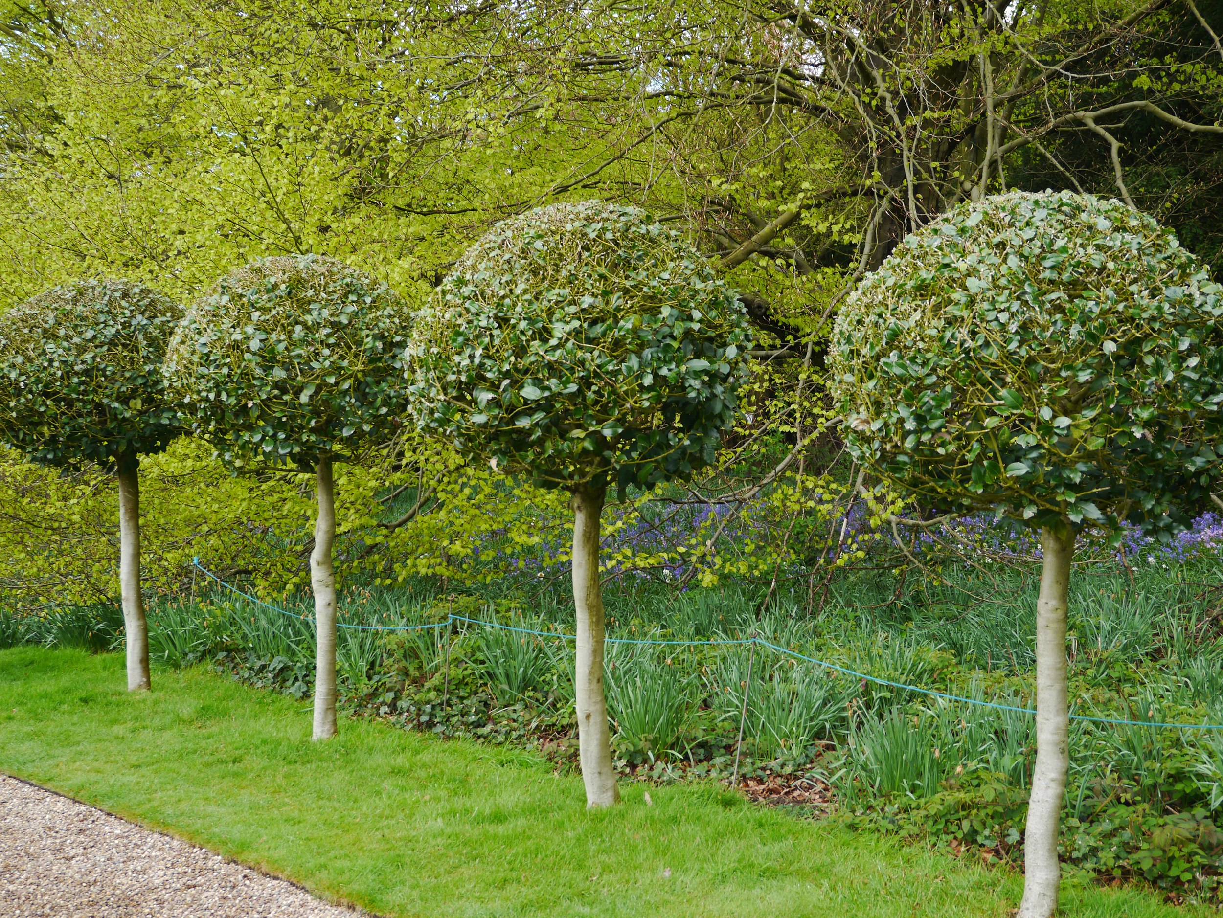 Sudbury Hall bay trees.jpg