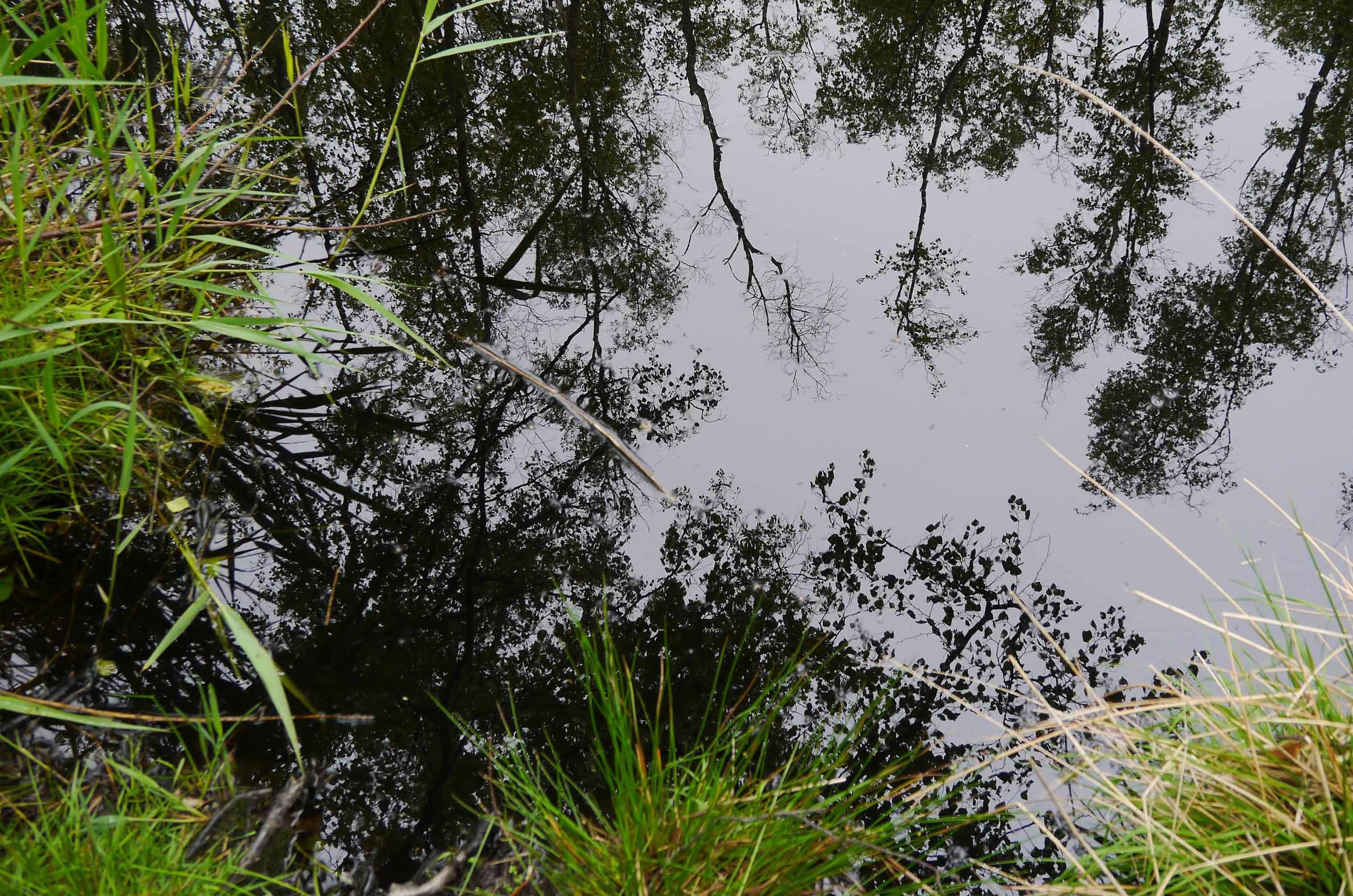 Reflections at Dunwich Heath