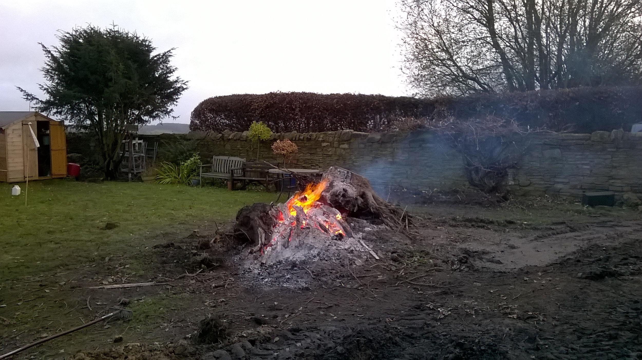Still burning the tree root