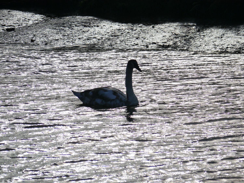 Saltfleet Haven