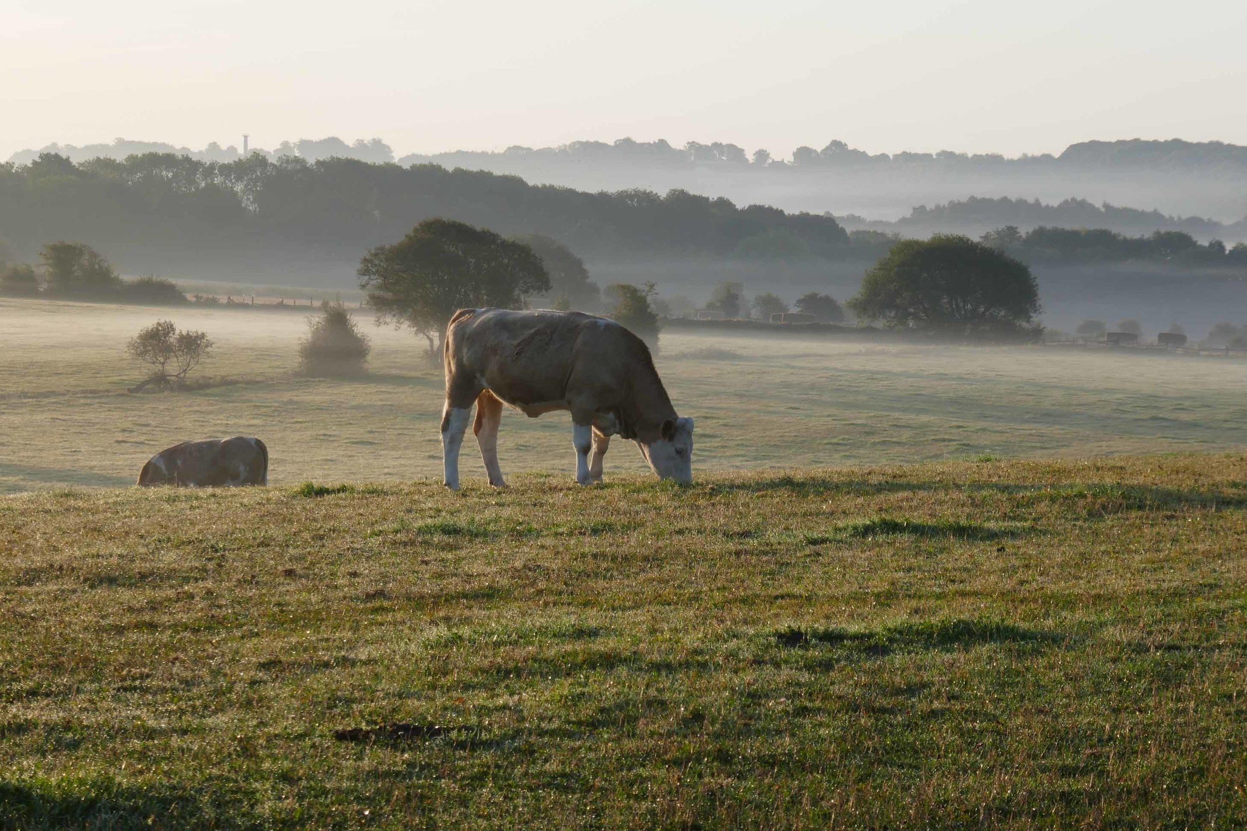early mist.jpg