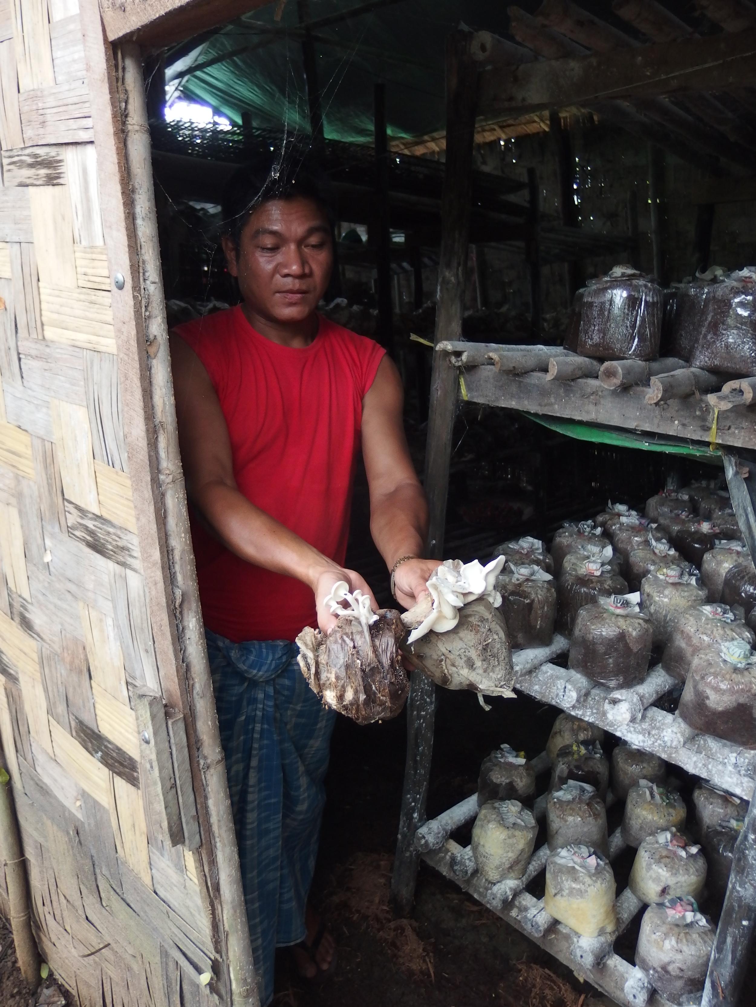 U Kyaw La tends to the clinic's large mushroom farm.