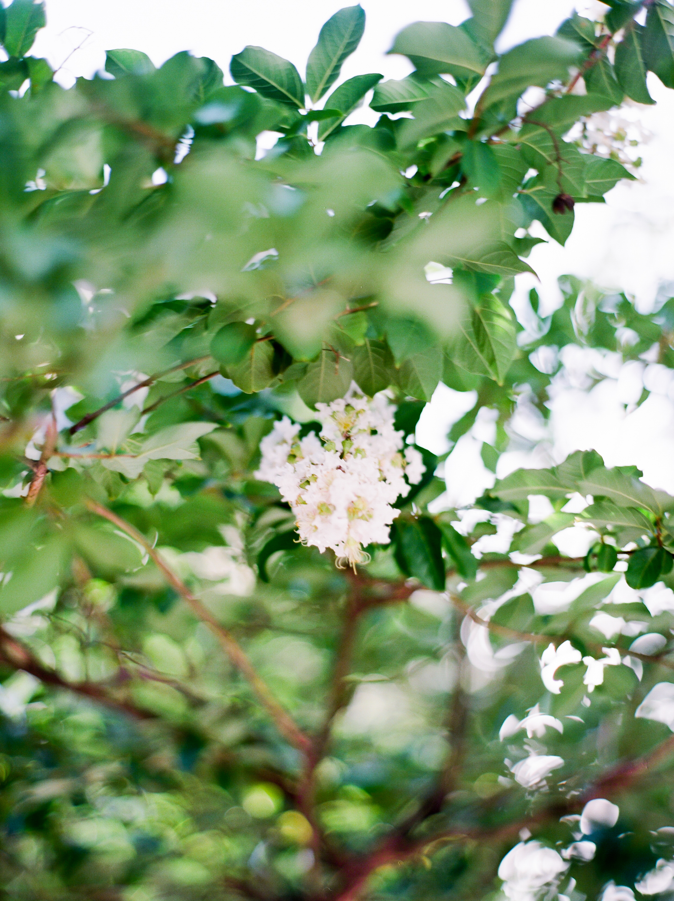 savannah-ga-wedding-film-photographers-kayliebpoplin