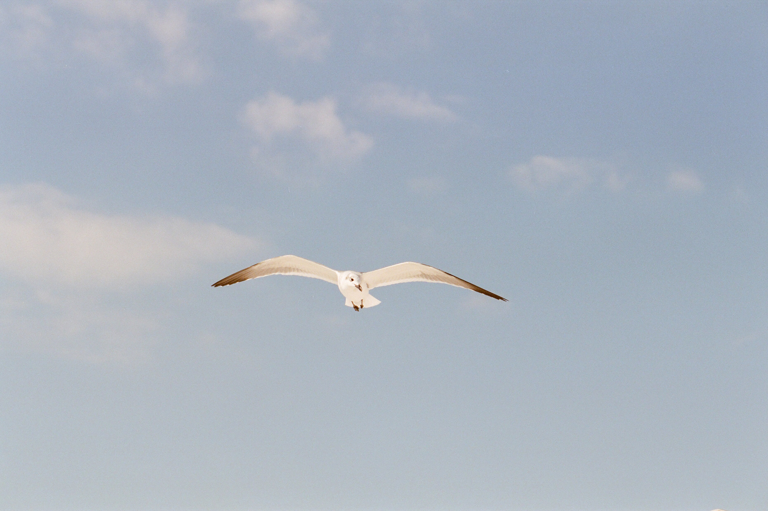 seagull-kayliebpoplinphotography