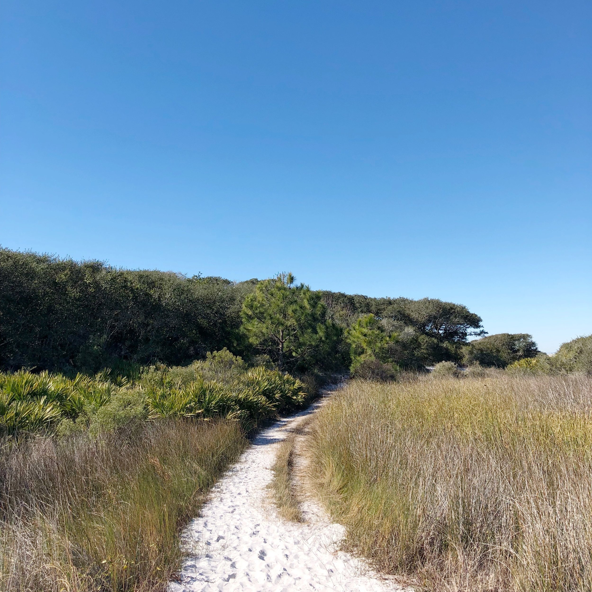 grayton beach hiking trails